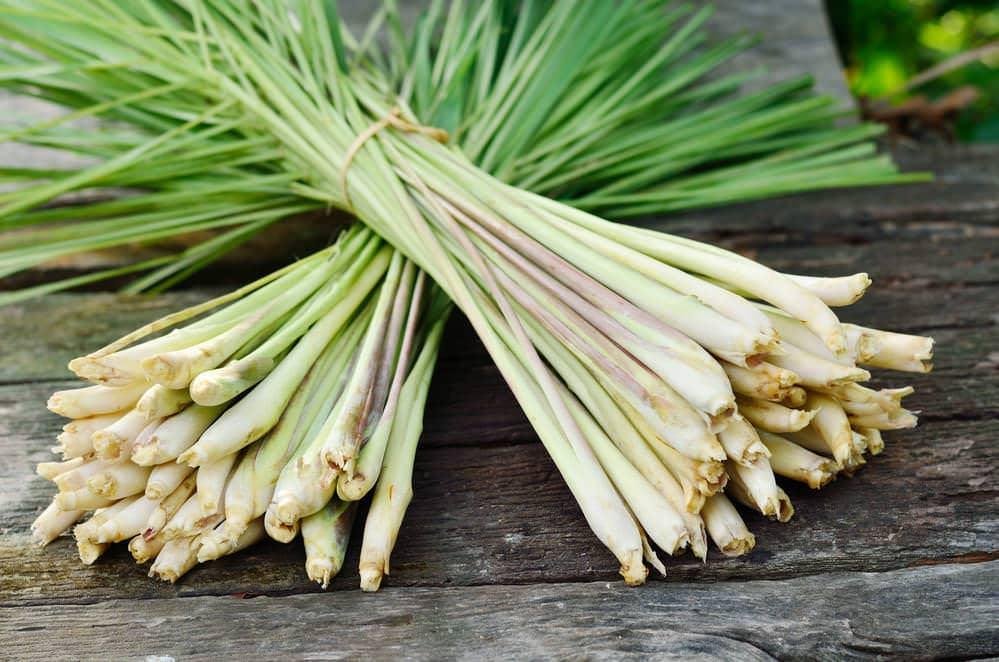 Lemongrass health and uses